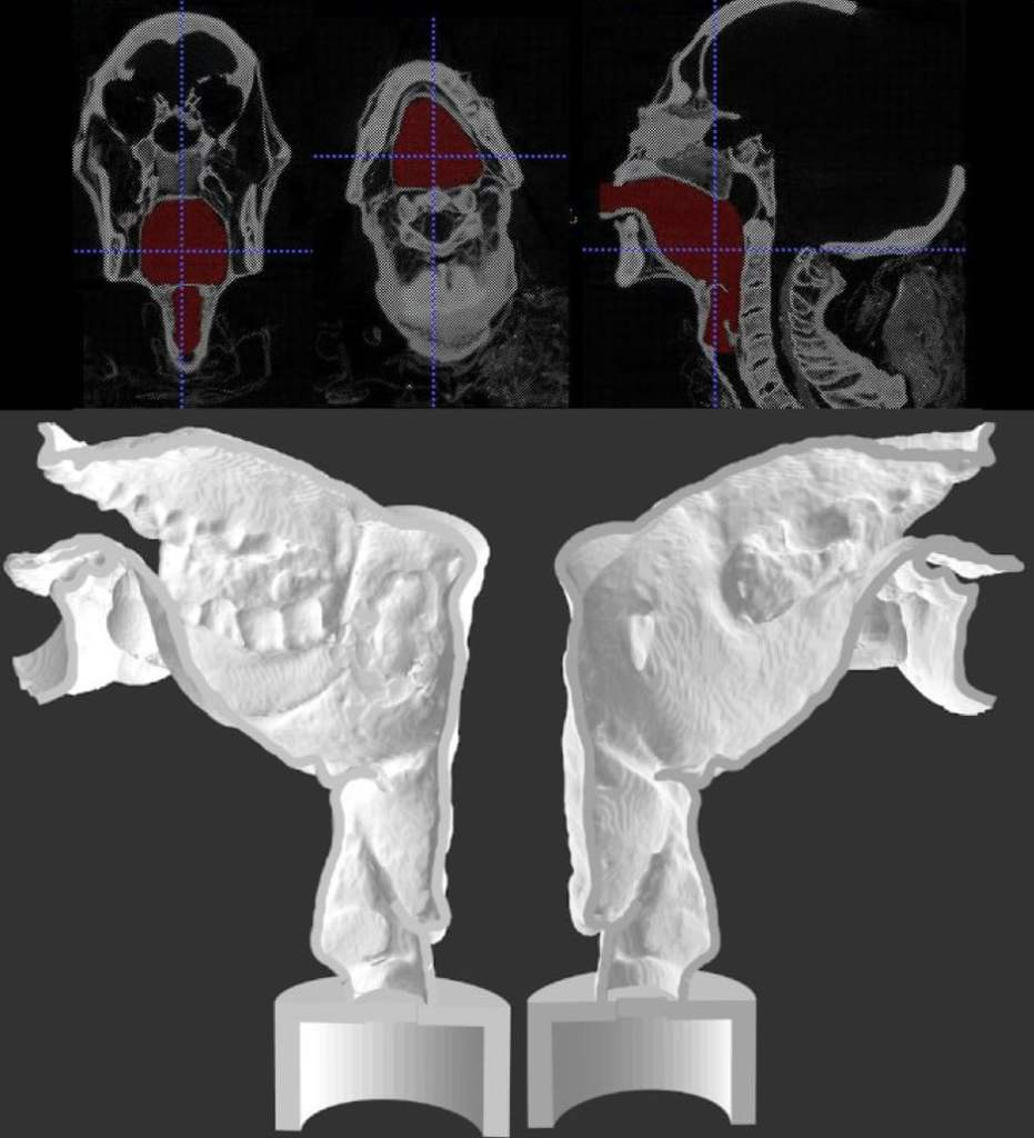 3D-Printed Replica of Vocal Tract