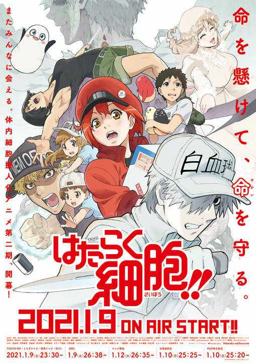 Cells at Work!! Season Two Visual